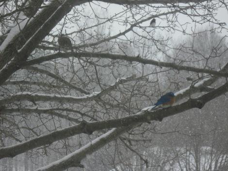 P&O Bluebird