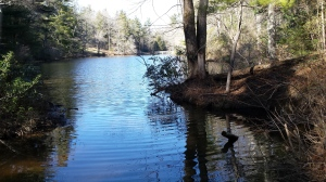 Part of the lake at the Carl Sandburg Home in Flat Rock, NC