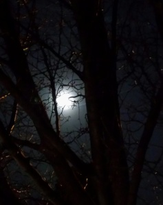 The moon accompanied me on last night's walk.