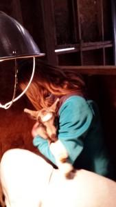 Baby goat love!