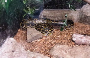 I mean, I accidentally set a python on my cousin Dudley at the zoo once. Once!