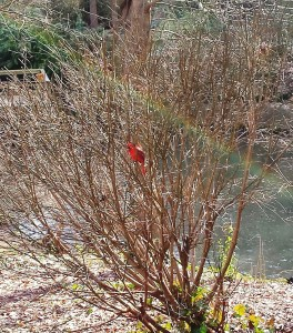 My dad's favorite bird. A rainbow. I think the zoo was the right place to be today.